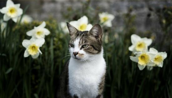 sommige planten en bloemen zijn giftig voor uw huisdier