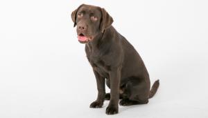 Wanneer moet u met uw hond of kat de dierenarts bellen?