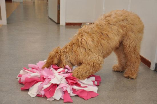 Snuffelen is voor iedere hond fijn en goed
