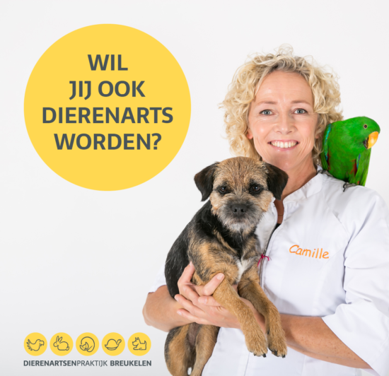 Junior Dierenarts Workshops